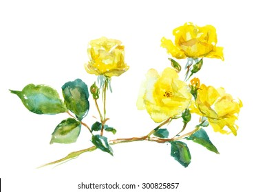 branch of yellow rose, watercolor, drawing on paper