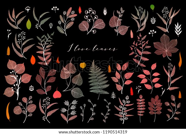 Branches and leaves, fall, spring, summer. Botanical illustration in bright color on black background