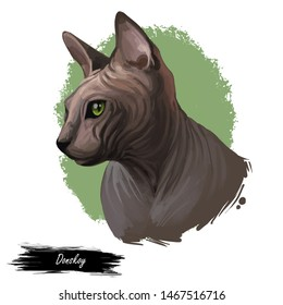 Breed Donskoy, Don Sphynx or Russian Hairless cat isolated on white background. Digital art illustration of hand drawn kitty for web. Hairless pet with large ears, almond shaped eyes and soft skin