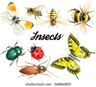 bright beautiful watercolor insects isolated on white background