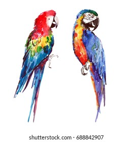 Bright colorful beautiful lovely sophisticated jungle tropical yellow, green, red and blue big tropical parrot watercolor hand illustration
