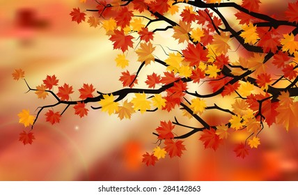 Bright colorful leaves on the branches in the autumn forest