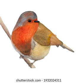 a bright orange bird sits on a branch with a watercolor illustration . blank for a postcard, design element, children's manual
