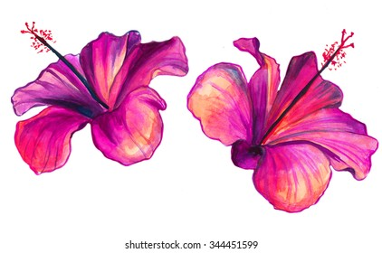 Bright red watercolor Hibiscus flowers
