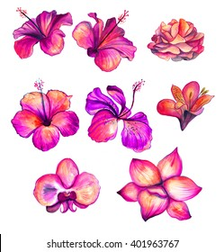 Bright red watercolor Hibiscus, rose, orchid, lily flowers collection, floral tropical set illustration