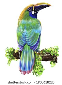 A bright toucan bird on a tree branch