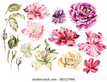 Bright watercolor peony flowers, iris, lilies, petunias, roses. Illustration