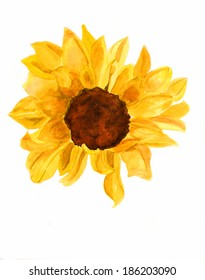 Bright yellow sunflower on white background