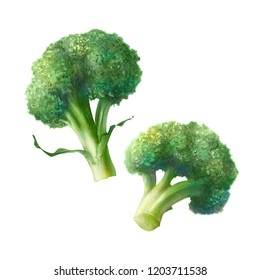 Broccoli Pencil Illustration Isolated on White