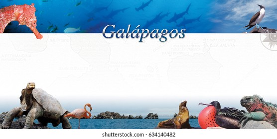 Brochure design composed of photos of Galpagos island animals with map of islands on white background. With copy space