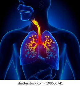 Bronchiolitis - Inflammation of the Bronchioles Anatomy