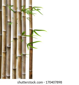 Brown Bamboo With Green Leafs on a White Background