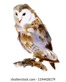 Brown barn owl on branch isolated on a white background, watercolor
