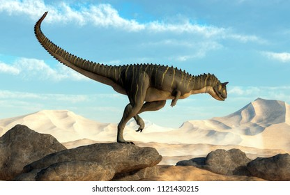 A brown Carnotaurus hunts for prey in a sandy desert.  The theropod dinosaur stands on some large boulders that overlook a dry flat land ringed by large dunes. 3D Rendering