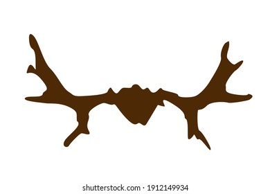 Brown elk horns on a white background