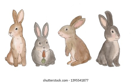 brown and gray little rabbit cute
