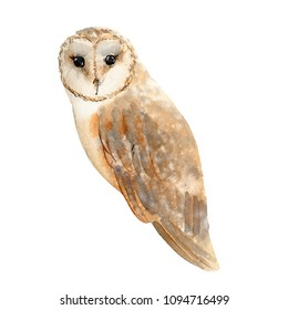 brown owl barn owl on a white background watercolor