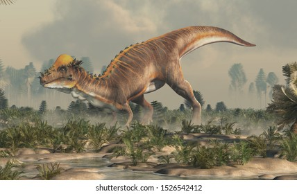 A brown Pachycephalosaurus in a prehistoric wetland. Pachycephalosaurus known for it's thick skull, was an dinosaur of the Cretaceous in North America. 3D Rendering