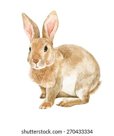 brown rabbit watercolor illustration