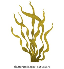 Brown Seaweed or kelp watercolor hand painted element isolated on white background. Watercolor illustration design.