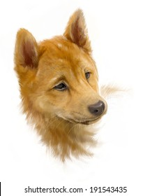brown shiba inu, puppy portrait on white, painted, rough brushstroke painterly look