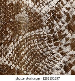 Brown Snake Skin Print
