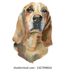 The Bruno Jura hound portrait. Hand painted, isolated on white background watercolor dog portrait.