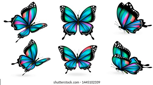 bue butterfly, isolated on a white