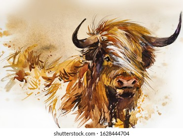 Bull. animal illustration. Watercolor hand drawn series of cattle. Scotish Highland breeds.