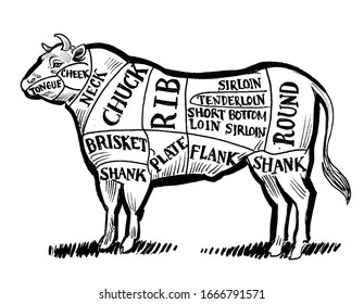 Bull butcher chart. Ink black and white drawing