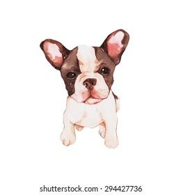 Bull dog, watercolor painting