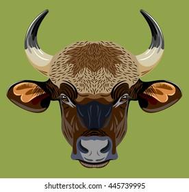 bull portrait