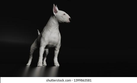 Bull terrier looking side standing on black floor 3d rendering