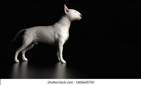 Bull terrier standing 3d rendering
