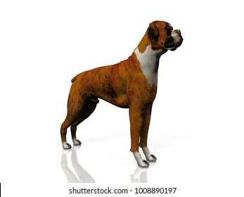 bulldog 3D illustration