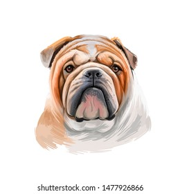 Bulldog dog breed isolated on white background digital art illustration. Medium-sized breed of dog English Bulldog or British Bulldog muscular, hefty dog with wrinkled face, distinctive pushed-in nose