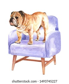 Bulldog of a dog. Watercolor hand drawn illustration. Watercolor English Bulldog stand on sofa chair layer path, clipping path isolated on white background.