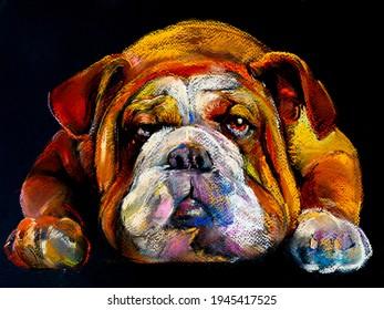 Bulldog pastel portrait. Modern art