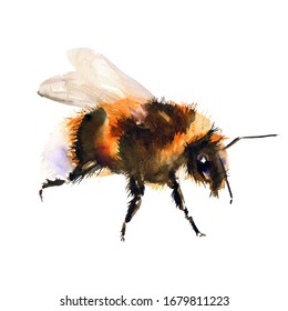 Bumblebee/bee watercolor drawing. Isolated objects. Insects