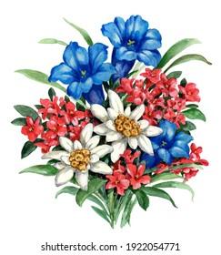 bunch of alpine flowers gentian alpine rose edelweiss artwork illustration