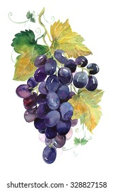 Bunch of black grapes watercolor illustration
