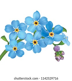 Small flowers perennials images stock photos vectors shutterstock bunch of blue forget me not flowers with leaves isolated on white background 3d illustration mightylinksfo