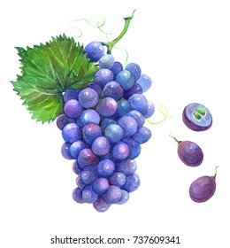 Bunch of blue grapes with cut berries and green leaves. Watercolor illustration isolated on white background.