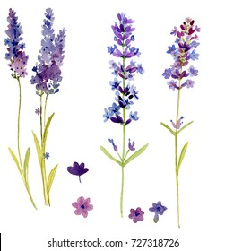 Bunch of lavender flowers on a white background. Decorative set of watercolor hand painted bright colorful lavande elements. Nice for design card and web decoration.