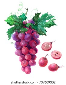 Bunch of pink grapes with cut berries and green leaves. Watercolor illustration isolated on white background isolated on white background.