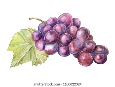 Bunch of red grapes watercolor illustration