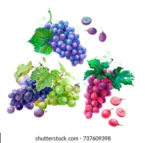 Bunches set of blue, green and pink grapes with cut berries and green leaves. Watercolor illustration isolated on white background.