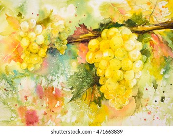 Bunches of  yellow grapes in vineyard.Picture created with watercolors.