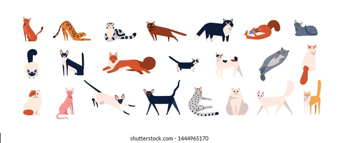 Bundle of adorable cats of various breeds sitting, lying, walking. Set of cute funny pets or domestic animals with colorful coats isolated on white background. Flat cartoon illustration.