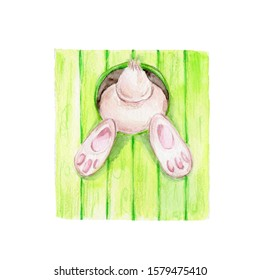 Bunny stuck in a hole in the fence; watercolor hand draw illustration; can be used for easter card; with white isolated background
